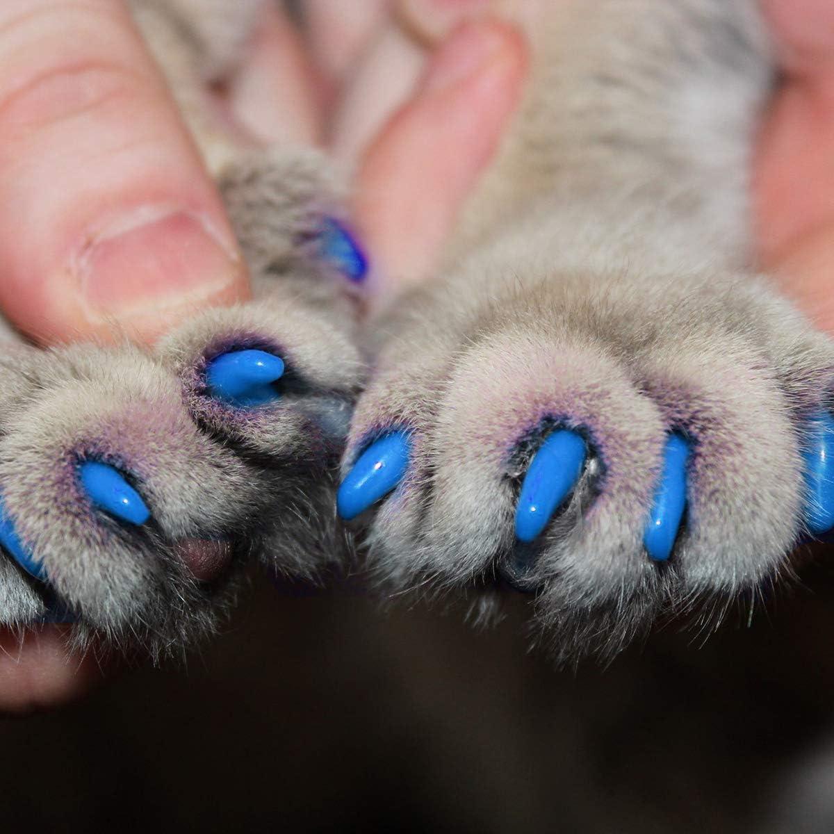 POPETPOP Cubiertas de uñas para Gatos con pegamento-40 Cubiertas de uña de Gato de Silicona Premium para Gatitos: Patas Blandas Capas de uñas de Gato XS y 2 pegamentos Adhesivos + 2
