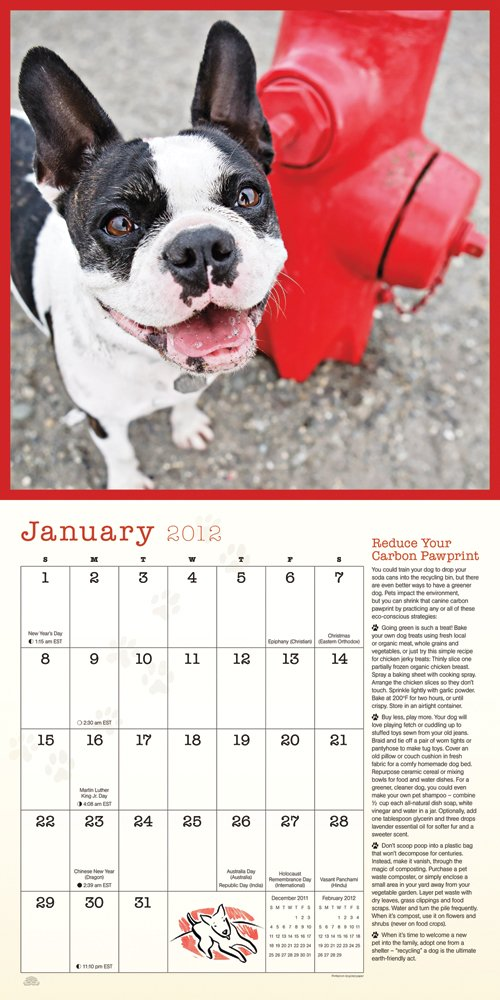 Healthy Dog: A Year of Healthy Tips for Your Four-Legged Friends 2012 Wall Calendar