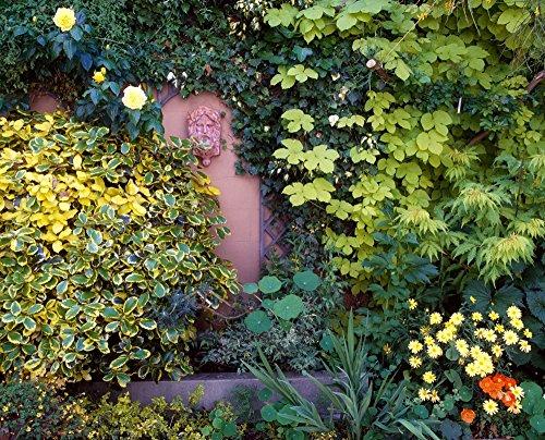 (The Courtyard Garden Fairfield Lodge Dublin Ireland Poster Print (34 x)