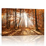 Canvas Wall Art Autumn Maple Tree Forest with Sunshine Landscape Nature USA Design Modern Home Decor Artwork Framed for Living Room Ready to Hang 28''x40''