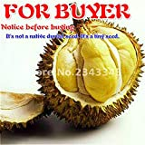 NEW Sale 20pcs A Lot Delicious Durian Seeds King Of Tropical Fruit Trees Seed Giant GARDEN Plants Bonsai Tree Sementes . Deep Blue