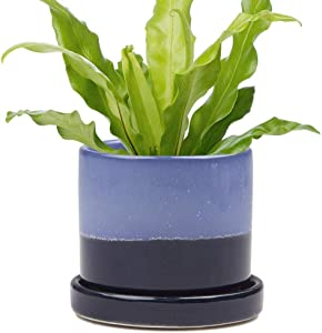 Chive - Minute, Succulent, Cactus Pot and Saucer Ceramic Flower and Plant Container with Drainage Hole and Detachable Saucer Great for Indoor/Outdoor Garden Decor (Cobalt Blue)