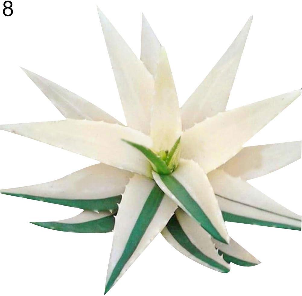 Rose Iris Tectorum Sunflower Cobaea Scandens Seed 1# Aloe Vera Seeds 100Pcs Rare Aloe Vera Succulent Plant Perennial Anti-Radiation Home Garden Seeds