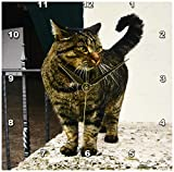 3dRose Cat Wall Clock, 10 by 10-Inch