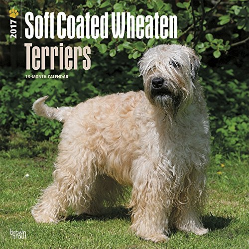 "Soft Coated Wheaten Terriers 2017 Wall Calendar, 12"" x 12"""
