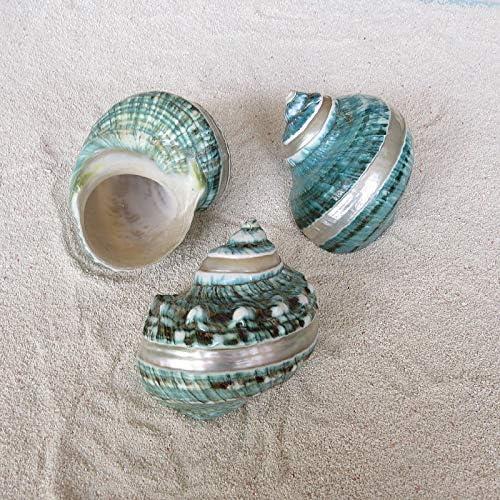 Hermit Cangrejo Conchas Mar Conchas De Caracol 3