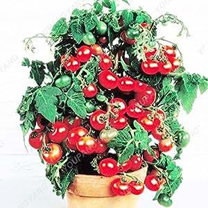 200 Semillas jardín de la herencia Cherokee tomate amarillo semillas a granel del paquete siembra vegetales comestibles fantástico en Bonsai Para el hogar Jardín Amarillo