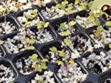 128 Cell Seedling Tray - Extra Strength Seed