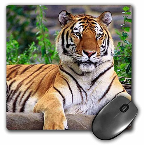 3dRose Inches Mouse Siberian mp 3132 1