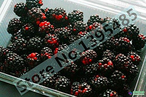 1000 deliciosos plantones de frutal 1000 azul, 1000black, 1000 rojo, amarillo 4 clases de color 4000 PCS semillas de frambuesa