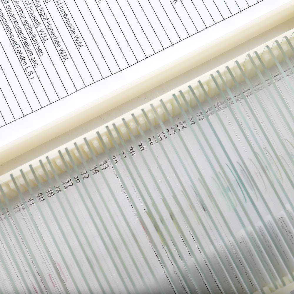 KKmoon Muestra de Vidrio Biol/ógico Preparado 50 Unids//set B/ásico Animal Plantas Insectos Tejidos Ciencia Esp/écimen Cubierta Deslizamientos Port/átil Microscopio Educativo Diapositivas