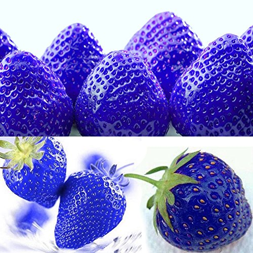 (300pcs Blue Climbing Strawberry Seeds Tree Seed, Delicious Fruit Seeds For Home & Garden Bonsai Seeds Planting)