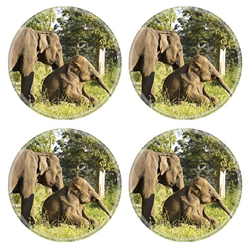 Luxlady Round Coasters IMAGE ID: 34374105 Two Asian elephant in the open zoo of Thailand - Safari Swivel Wheel Single