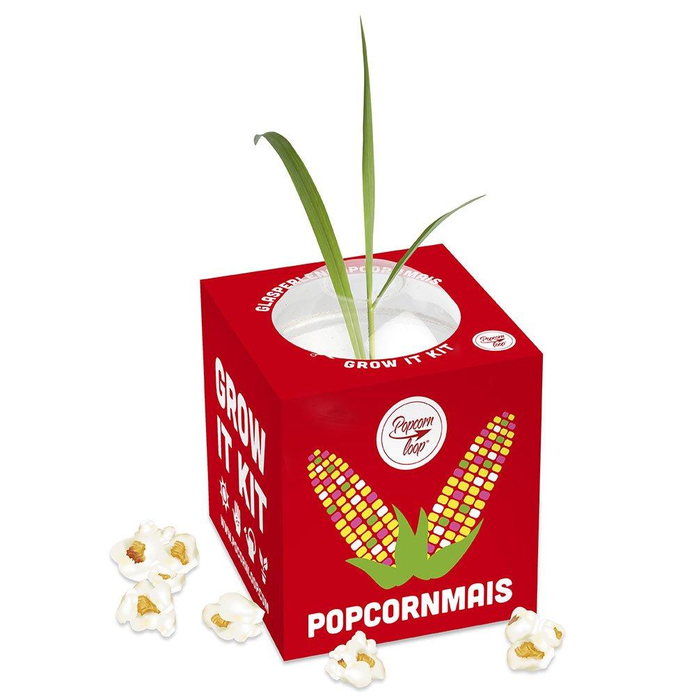 Pflanzen Anzucht Maispflanze - Anzuchtset Anzuchtserde Zimmergewä chshaus Gentechnikfrei Mais Geschenkidee Mit Anleitung Popcornloop