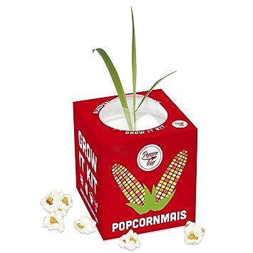 Pflanzen Anzucht Maispflanze Anzuchtset Anzuchtserde