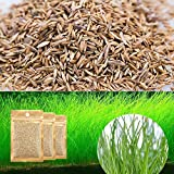 Zafina 3 Pack Aquarium Plant Seeds 0.35oz/Pack Dwarf Hairgrass Seeds Easy to Plant and Maintain Creates a Natural Ecosystem for Your Fish