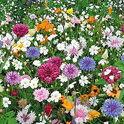 Russian Lawn Eco-Magistral, Lawn Seeds Blooming from Russia : Garden & Outdoor