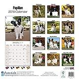 Papillon Dog Calendar AVONSIDE