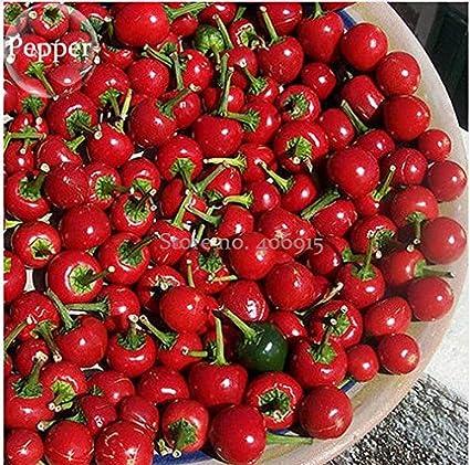 Amazon.com: Nuevo grande de rojo cereza dulce pimienta, 20 + ...