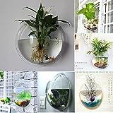 Piante da interno - Gardenia pianta da interno o esterno ...