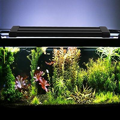 Amzdeal White Blue Aquarium Light, Fish Tank LED Light