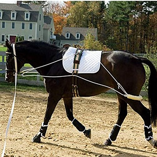 Aid System (The Ultimate Horse Lunging Training Aid System Lunge Equipment (Cob/Horse, Black))
