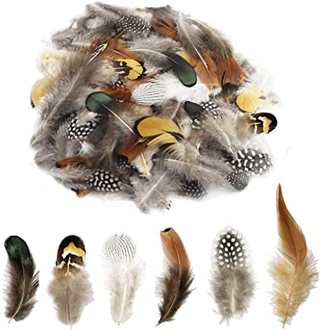 50 Pcs Natural Ringneck Pheasant feather 2-3 inches LolliBeads TM