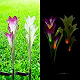 Solar Garden Stake Lights Outdoor, Espier 2 Pack Solar Powered Lights with 8 Lily Flower Lights, Multi-Color Changing Decorative Lighting for Garden, Patio, Backyard (Purple and White) Review