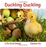 Duckling Duckling (Life Cycle Books)