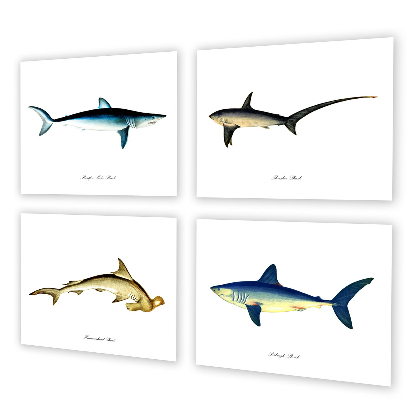 Sharks Wall Art Prints Set of 4 Unframed Wall Art Nautical Wall Decor
