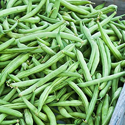 Strike Bush Bean Seeds - Non-GMO, Heirloom Green Snap Bean Seeds - Vegetable Garden Seeds