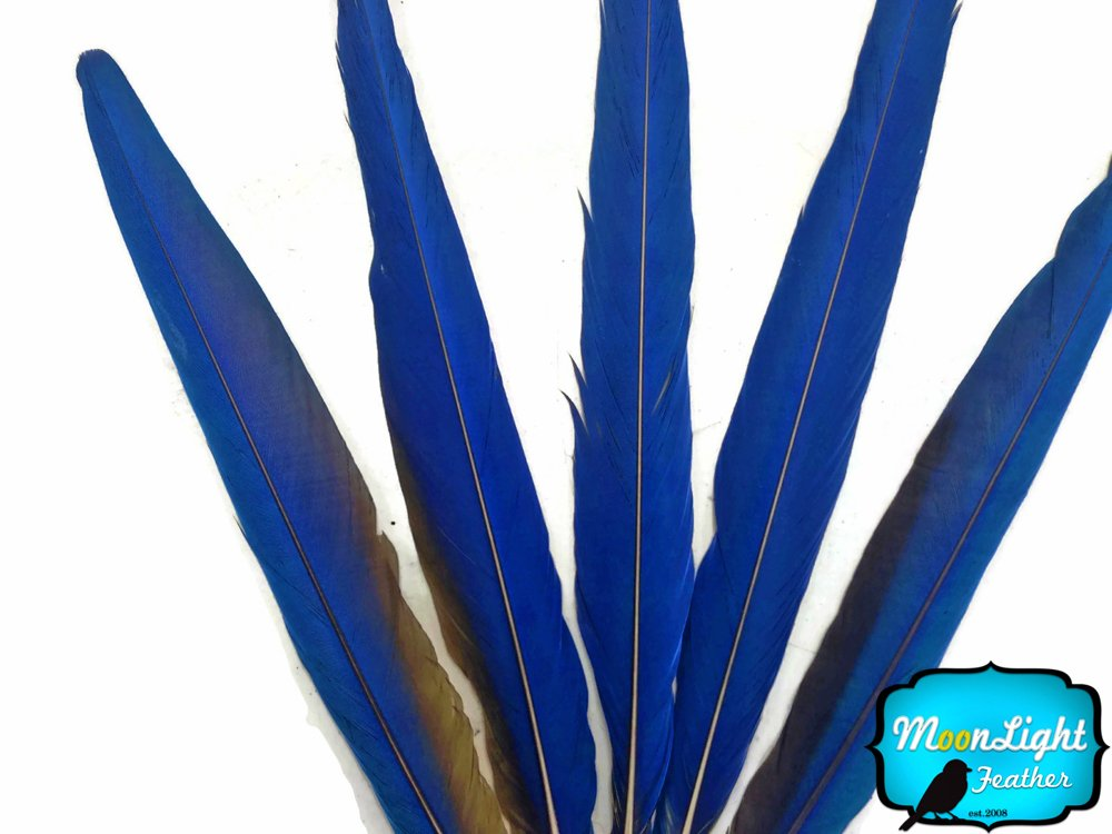 Moonlight Feather | 5 Tails Feathers - Iridescent Blue And Yellow Macaw Tail Feather Set - Rare- Indian Native Craft Supplies