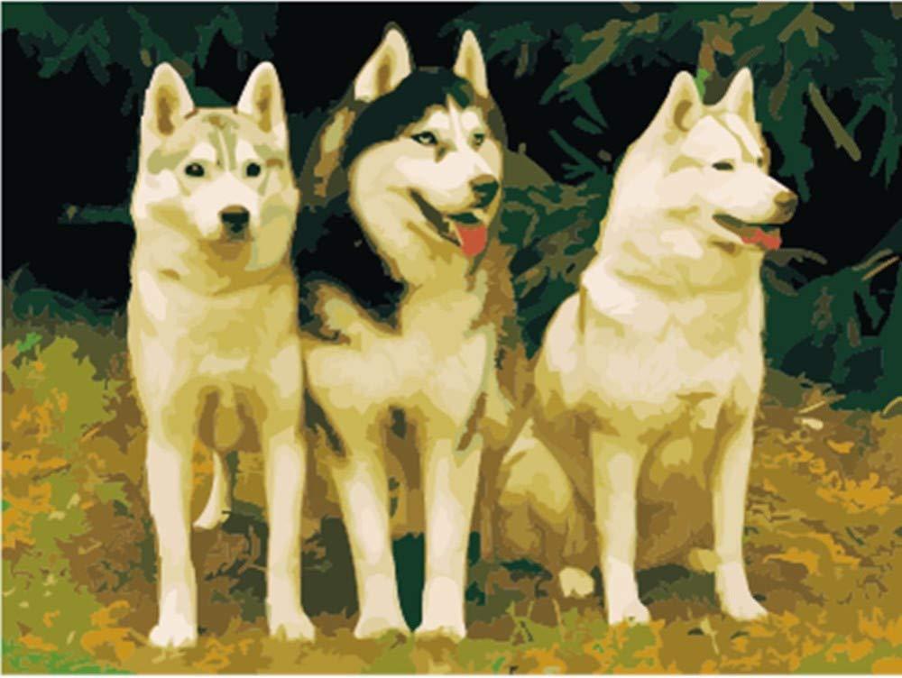 Malen Nach Zahlen DIY Husky Dog Für Erwachsene Hauptdekorations-Geschenke 40x50cm with Combination Frame B07PNYGZL1   Zuverlässiger Ruf