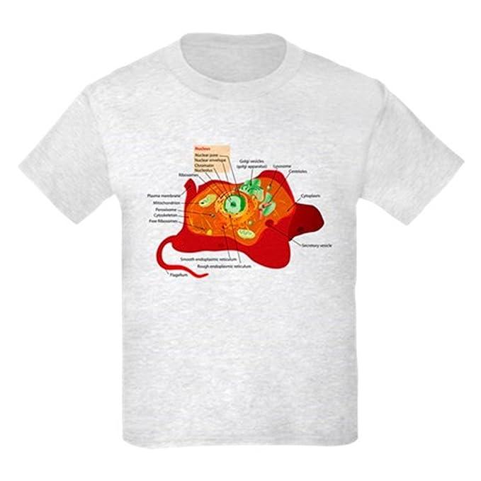 20f558a49 Amazon.com: CafePress - Animal Cell Kids Light T-Shirt - Kids Cotton ...