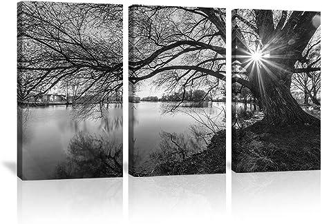 Tree wall art print tree photography nature photography fine art photography modern stretched canvas farmhouse art nature tree art print