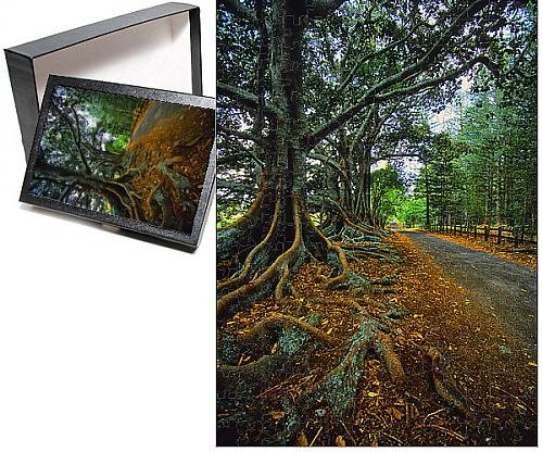 - Media Storehouse 252 Piece Puzzle of The Moreton Bay fig-Trees That line New Farm Road on Norfolk Island (12475949)