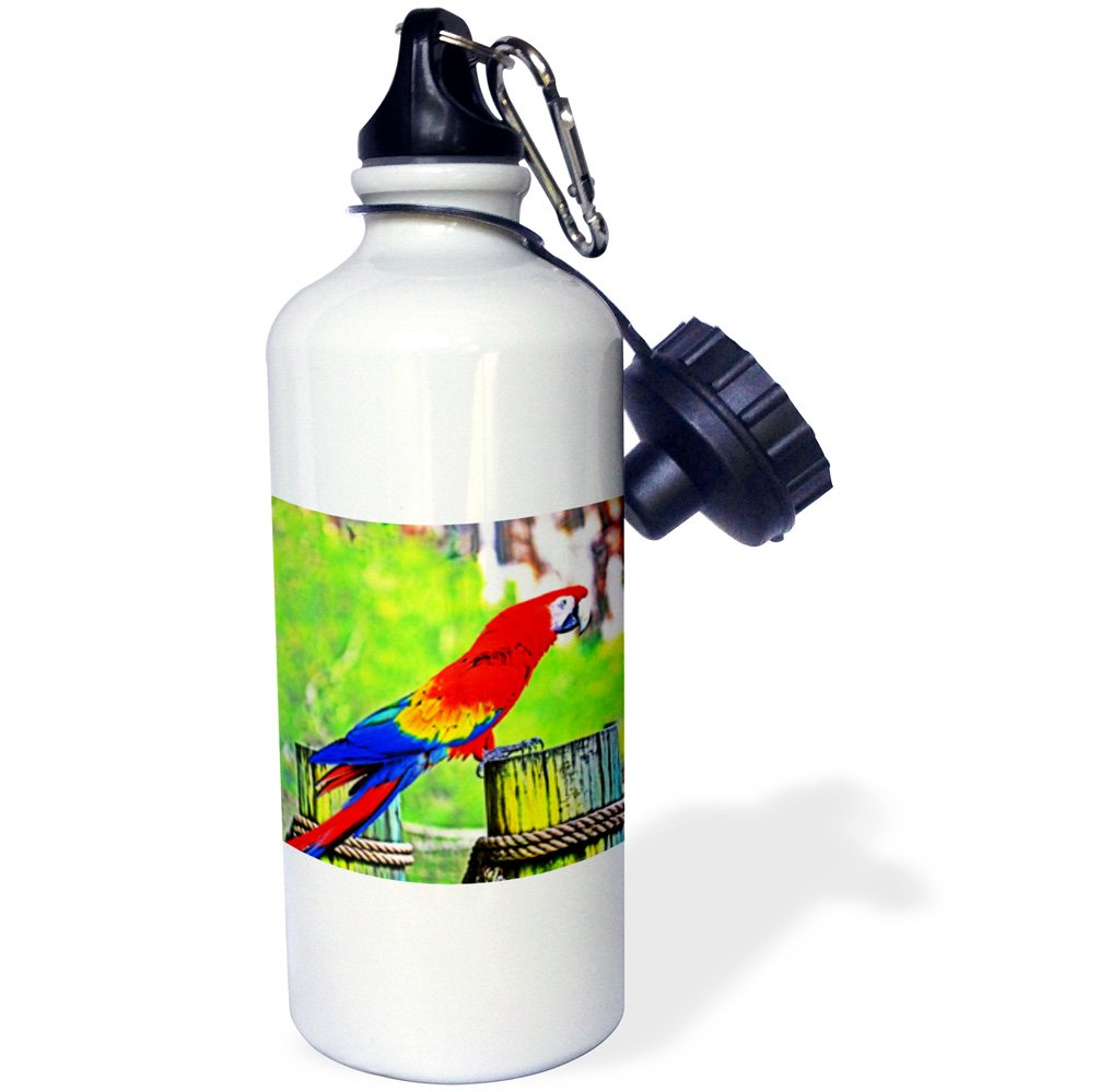 3dRose Macaw HDR Saturated Bird Image-Sports Water Bottle, 21oz (wb_178510_1), 21 oz Multicolored