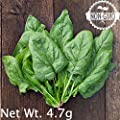 Gaea's Blessing Seeds - Organic Giant Winter Spinach Seeds 300+ Seeds Non-GMO Open-Pollinated Heirloom 95% Germination Rate Net Wt. 4.5g