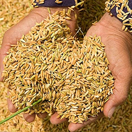 Pmw® - Paddy Seeds - Vadlu - For Pooja & Germination - 500 Grams: Amazon.in: Garden & Outdoors