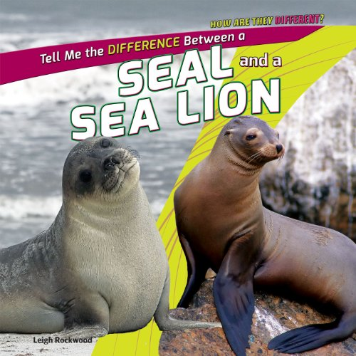 A Seal and a Sea Lion (How Are They Different?)