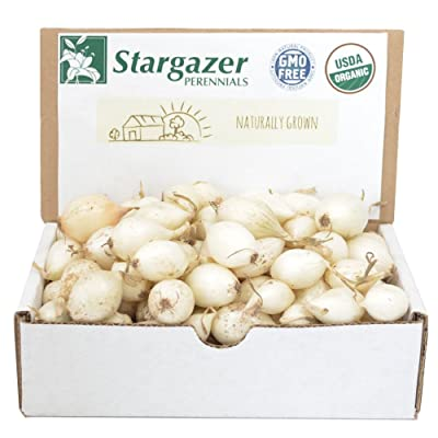 Stargazer Perennials White Ebenzer Onion Sets 1 Pound | Organic Heirloom Non-GMO Bulbs - Easy to Grow : Garden & Outdoor