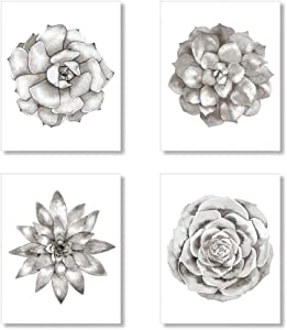 Grey and White Succulent Plant Art Prints, Botanical Wall Art Set of 4 Unframed 8x10 inches