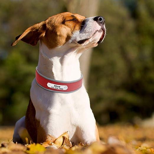 MAOBANG Collar Collar de Perro Grande Reflectante Collar de Perro ...