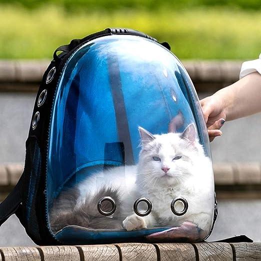 Lllffflll Portador for Gatos, Portador for Perros: portátil Transparente Visible pequeña Mochila for Mascotas Caja de Arena for Gatos Portador for Perros 36 * 25 * 44 cm (Color : Blue): Amazon.es: Hogar
