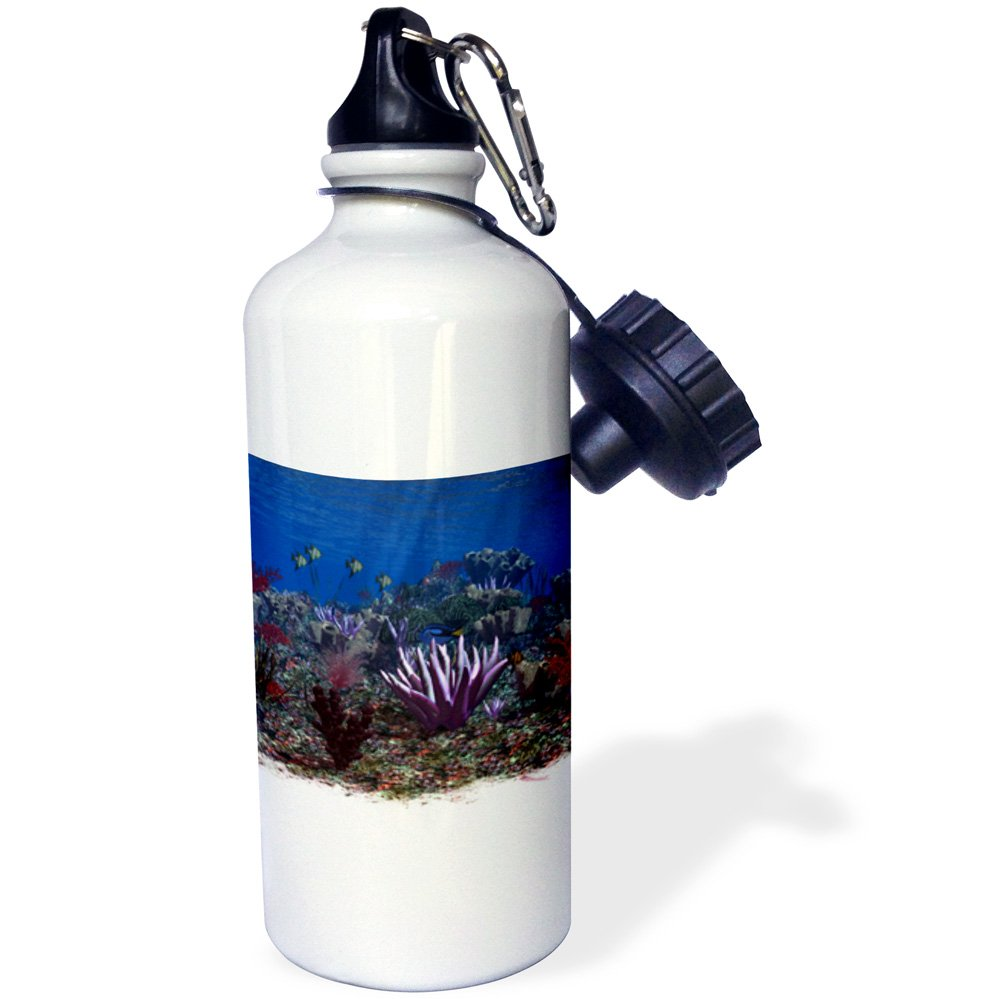 Multicolored 21Oz 3dRose wb/_181786/_1 The Colorful Life Of The Sea A Wonderful Underwater Scene Sports Water Bottle