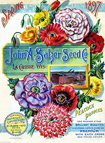 (A SLICE IN TIME 1897 Salzer Poppies Vintage Flowers Seed Packet Catalogue Travel Advertisement Poster)