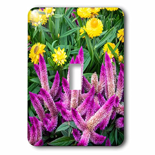 3drose-danita-delimont-flowers-yellow-strawflowers-and-purple-celosia-in-garden-usa-light-switch-covers-single-toggle-switch-lsp_278876_1