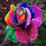 Yealsha 10pcs/pack Colorful Rainbow Rose Flower Seeds Petal Plants Home Garden Plant Rose Flower Seed