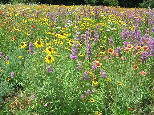 Southeast Wildflower Mix (12K seeds) bulk south east wholesale ST03 (8) by nk_zel