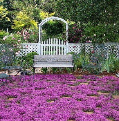 400 semillas de hierbas tomillo rastrero, Planta cubren la decoración de flores de jardín: Amazon.es: Jardín